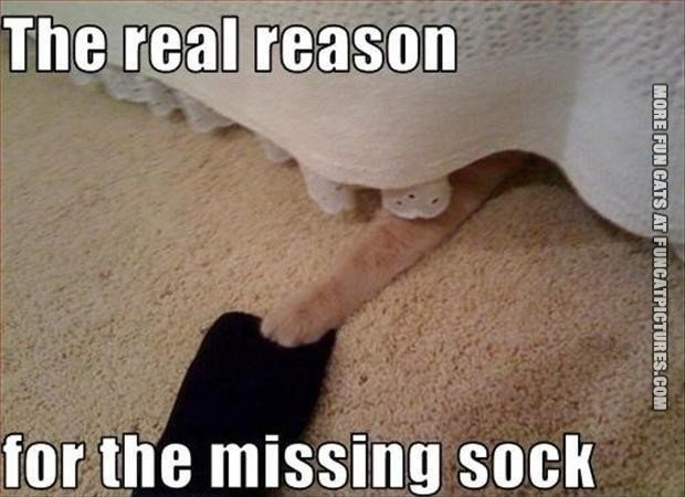 funny-cat-pics-the-real-reason-for-the-missing-sock