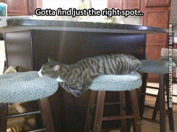 funny cat pics the right spot