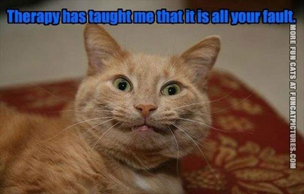 funny cat pics therapy has taught me
