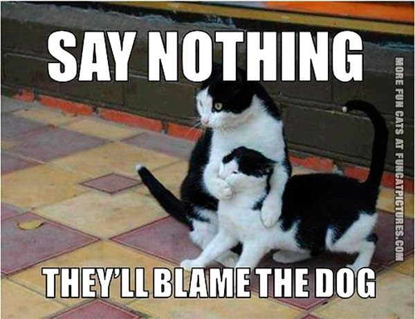 funny-cat-pics-theyll-blame-the-dog