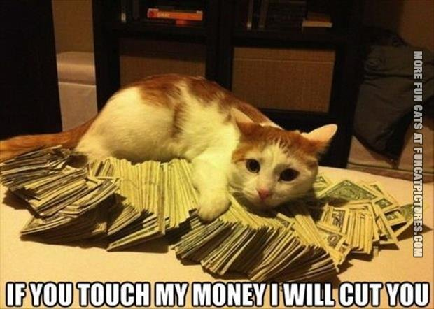 Cats Money Funny Cat Pics Touch my Money