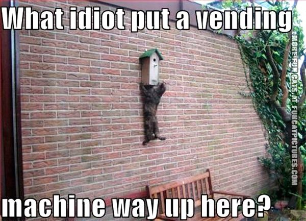 funny-cat-pics-vending-machine-on-the-wall
