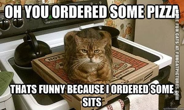 funny-cat-pics-you-ordered-some-pizza