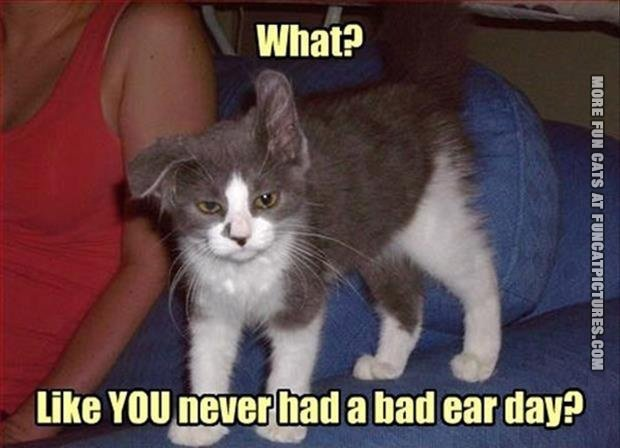 funny-cat-picture-bad-ear-day
