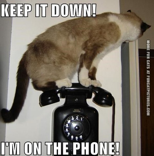 funny-cat-picture-cat-on-the-phone