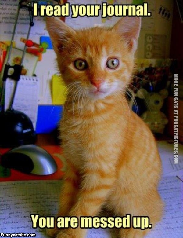 funny cat picture i read your journal