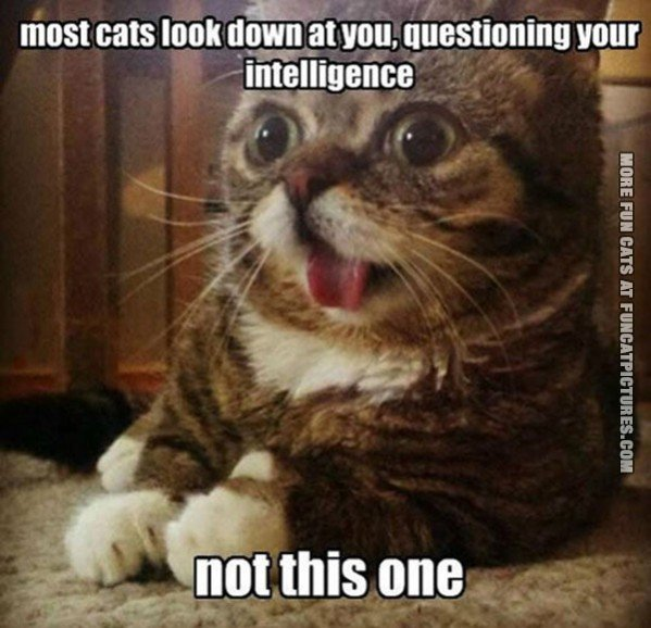 funny cat picture most cats look down on you not this one