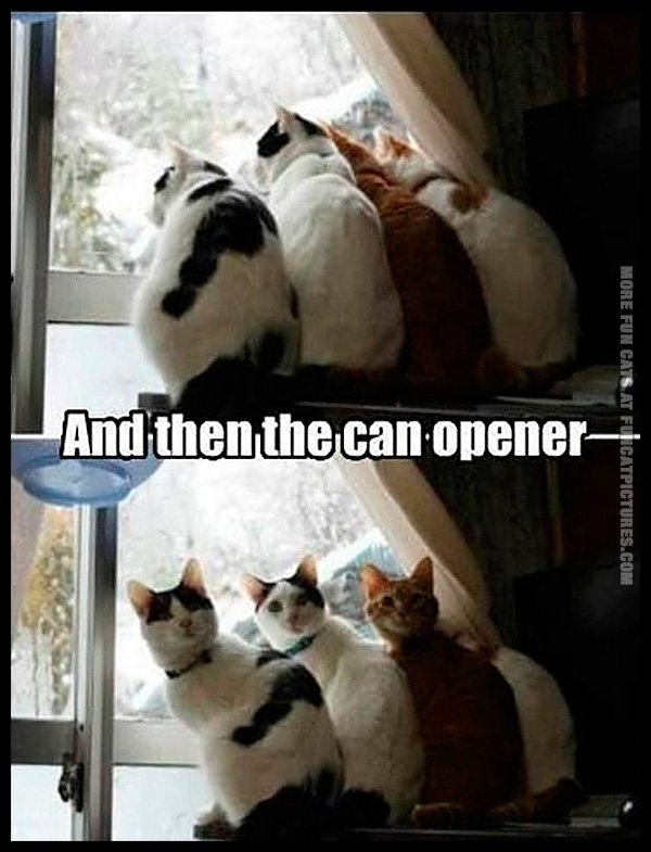 funny-cat-pics-and-then-the-can-opener