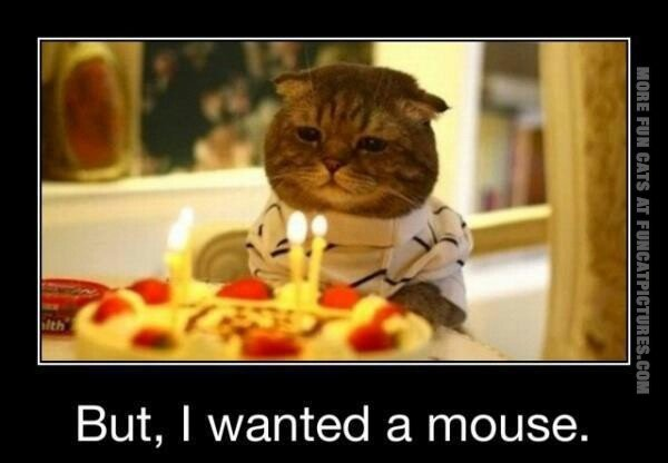 funny-cat-pics-but-i-wanted-a-mouse-birthday