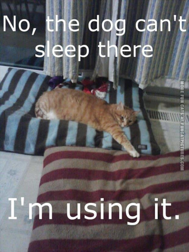 funny cat pics cant sleep there im using it