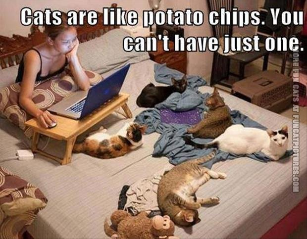 funny cat pics cat are like potato chips