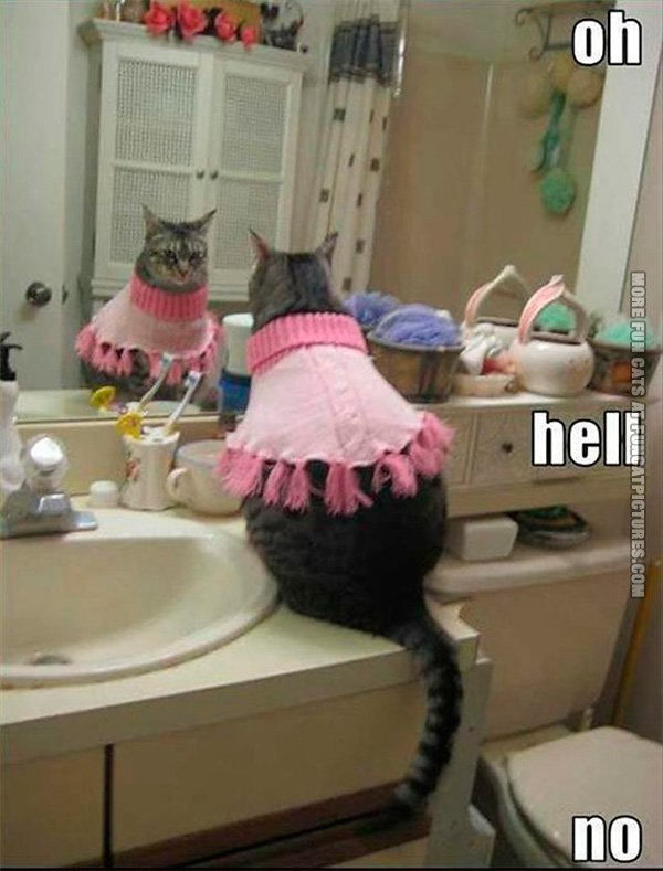funny-cat-pics-cat-in-a-dress-o-hell-no