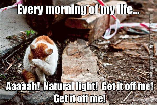funny cat pics cat in the morning