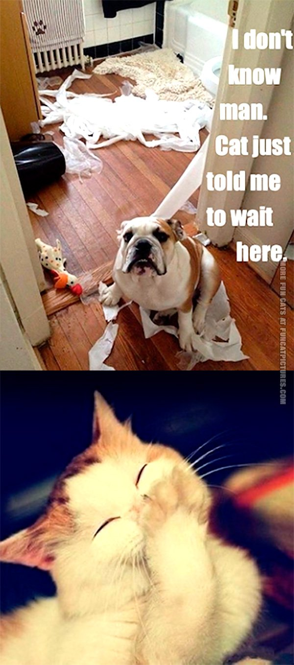 funny-cat-pics-cat-told-me-to-wait-here