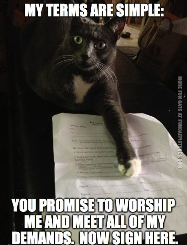 funny cat pics cats terms and conditions
