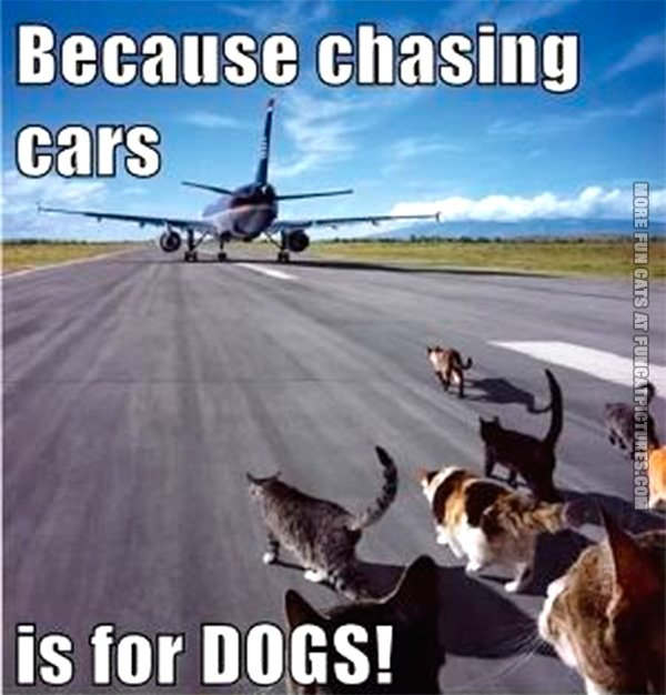 funny-cat-pics-chasing-cars-is-for-dogs
