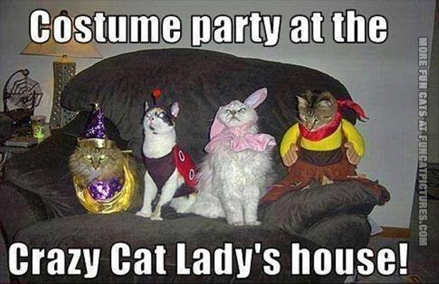 funny cat pics crazy cat lady costume-party