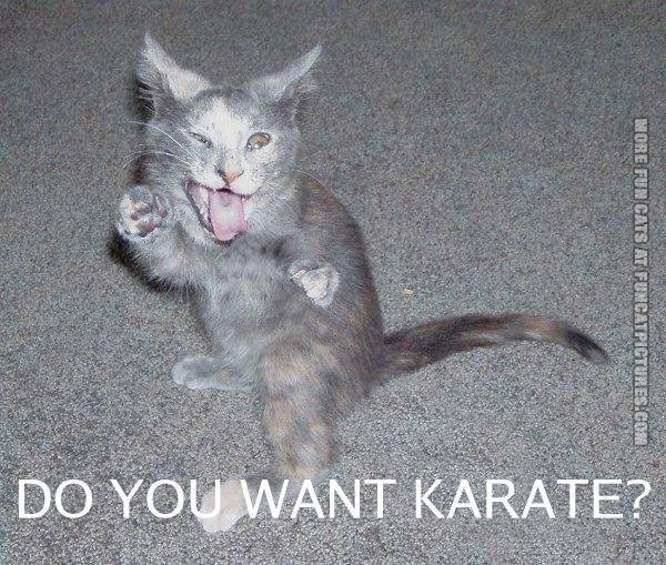 funny cat pics do you want karate
