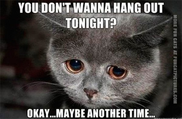 funny-cat-pics-dont-wanna-hang-out-tonight