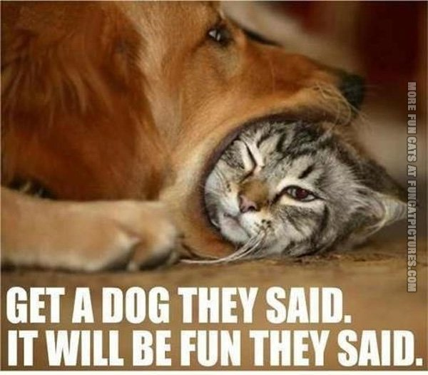 http://www.funcatpictures.com/wp-content/uploads/2013/10/funny-cat-pics-get-a-dog-they-said.jpg