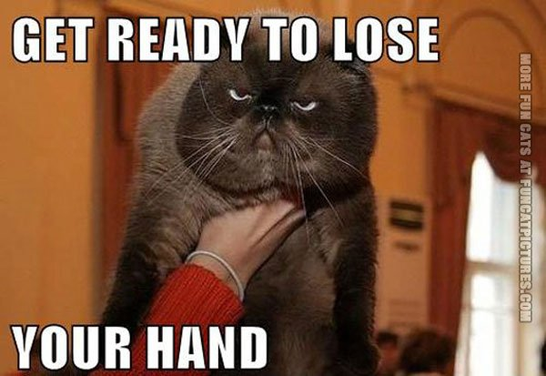 funny cat pics get ready to loose your hand