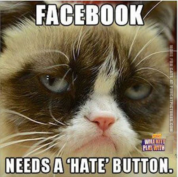 funny cat pics grumpy about facebook