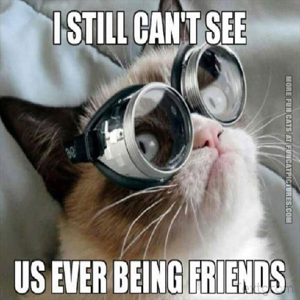 funny cat pics grumpy with glasses