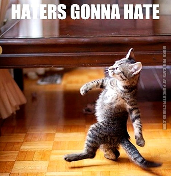 funny-cat-pics-haters-gonna-hate