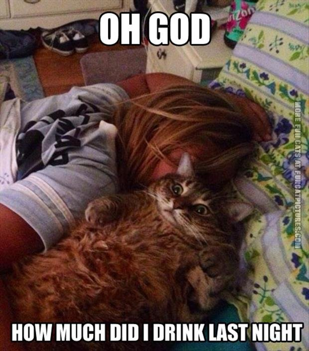funny cat pics how much did i drink last night