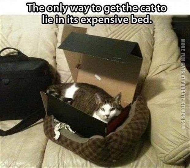 funny cat pics how to get a cat to lie in an expensive bed