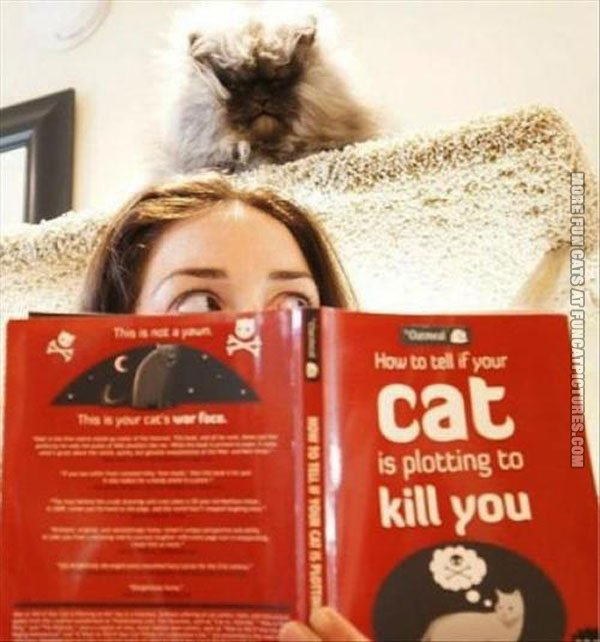 funny cat pics how to tell if your cat is plotting to kill you