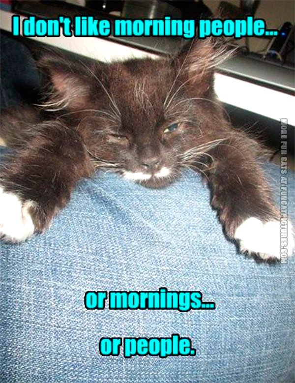 funny-cat-pics-i-dont-like-morning-people
