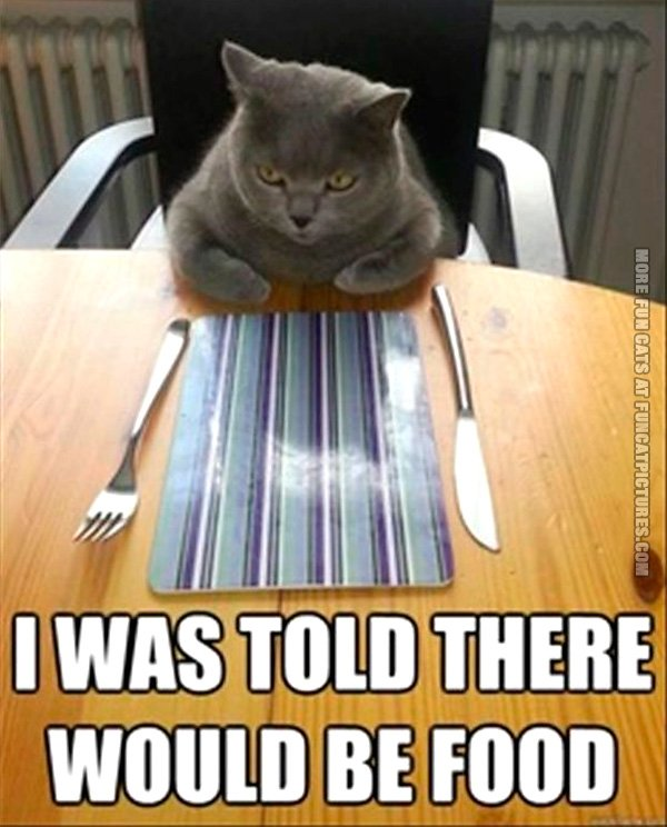 funny-cat-pics-i-was-told-there-would-be-food