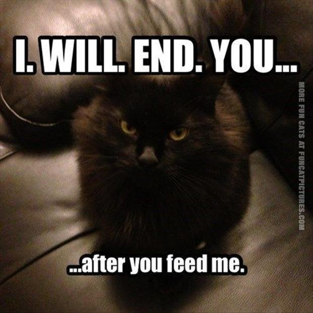 funny cat pics i will end you after you feed me