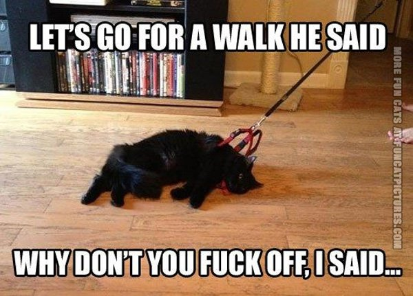 funny-cat-pics-lets-go-for-a-walk-he-said