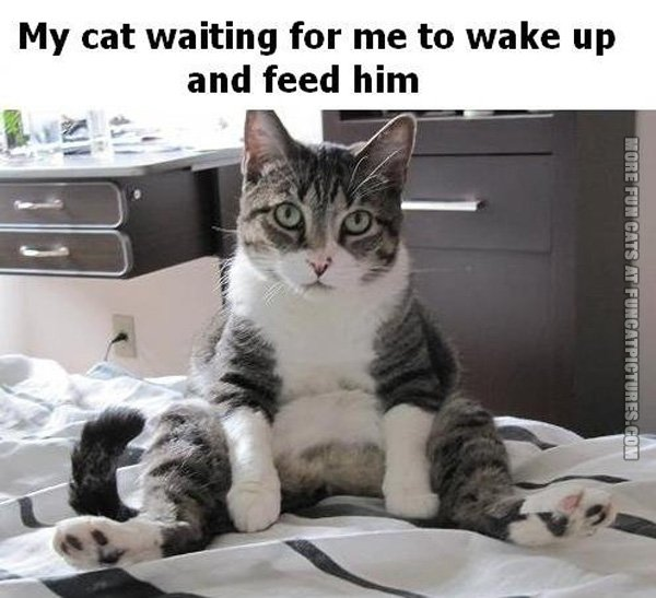 funny-cat-pics-my-cat-waiting-for-me-to-wake-up-to-feed-him