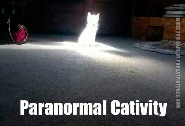 funny-cat-pics-paranormal-cativity
