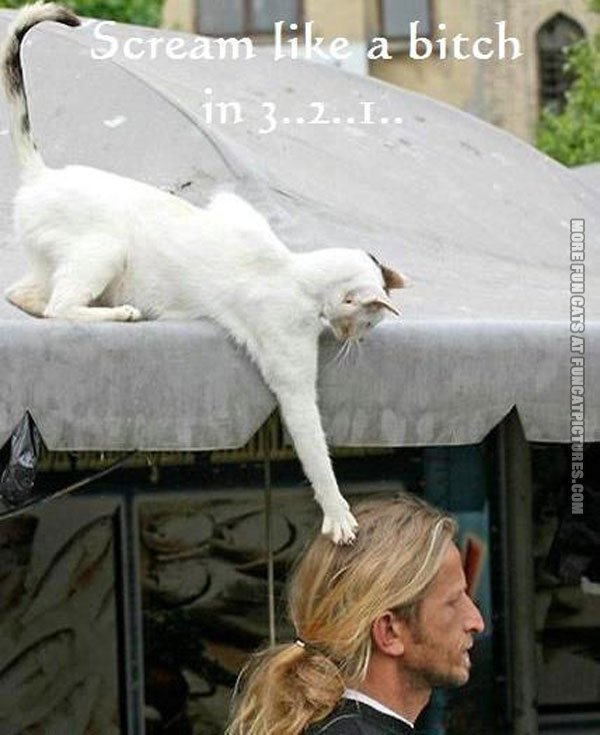 funny cat pics playing with hair