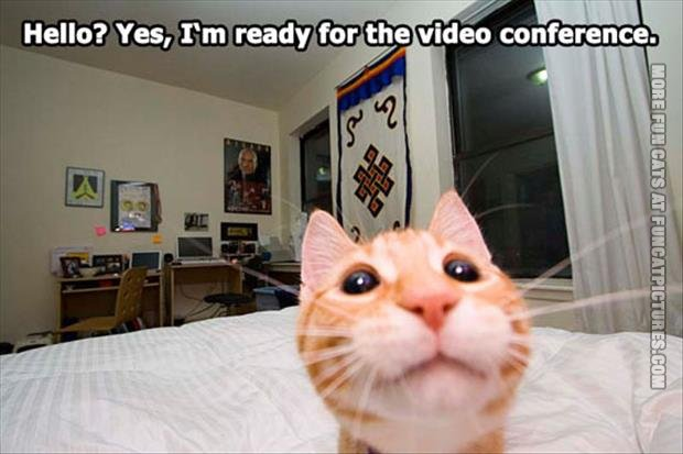 funny cat pics ready for video conference