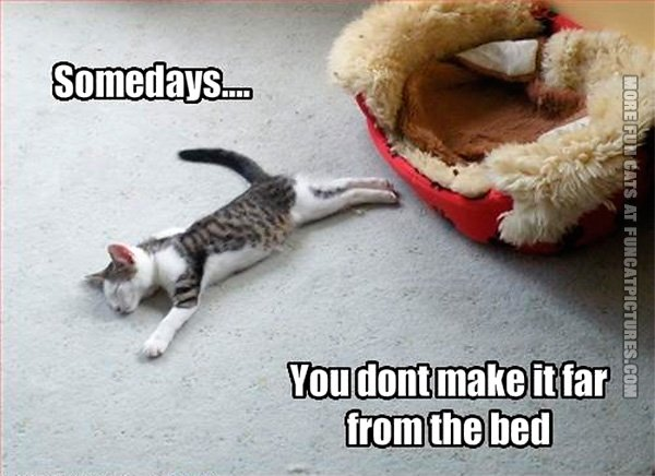 funny-cat-pics-somedays-you-dont-make-it-far-from-bed