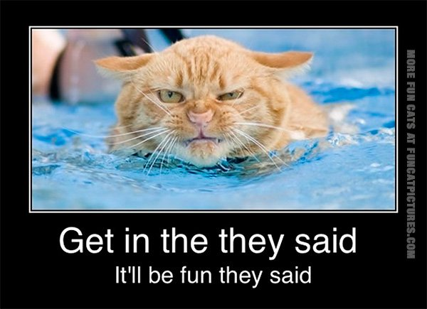 funny-cat-pics-swimming-cat-it-will-be-fun-they-said