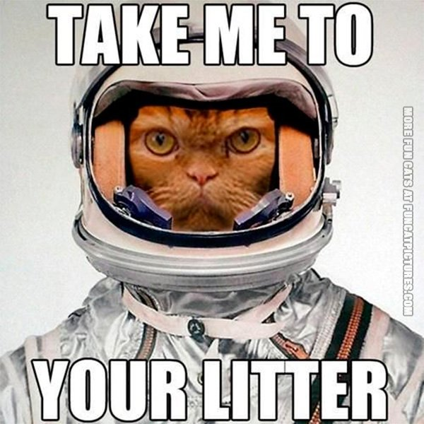 funny-cat-pics-take-me-to-your-litter
