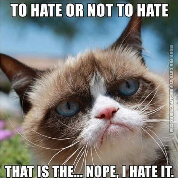 funny-cat-pics-to-hate-or-not-to-hate-grumpy