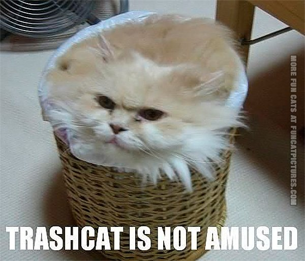 funny-cat-pics-trashcat-is-not-amused