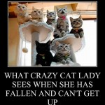What Crazy Cat Lady sees when she's fallen