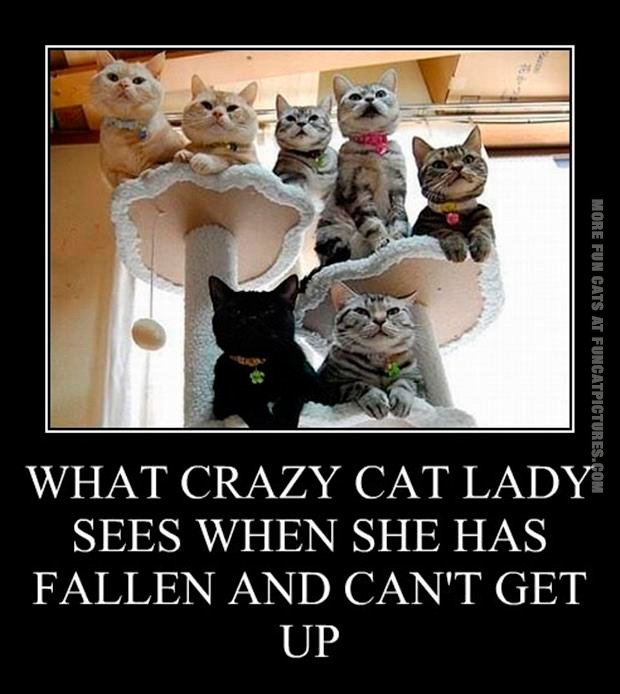 funny-cat-pics-what-crazy-cat-lady-sees