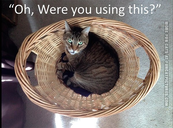 funny-cat-pics-where-you-using-this