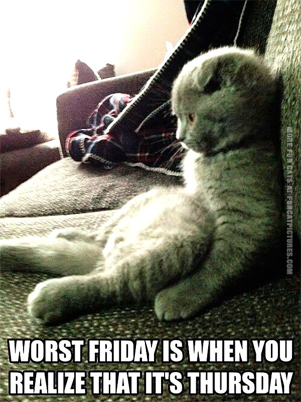 funny-cat-pics-worst-friday-is-when-you-realize-its-thursday