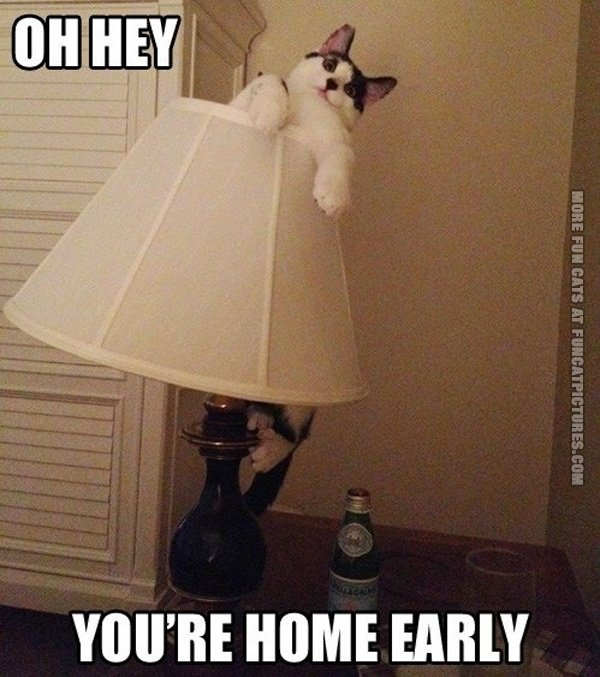 funny-cat-pics-youre-home-early