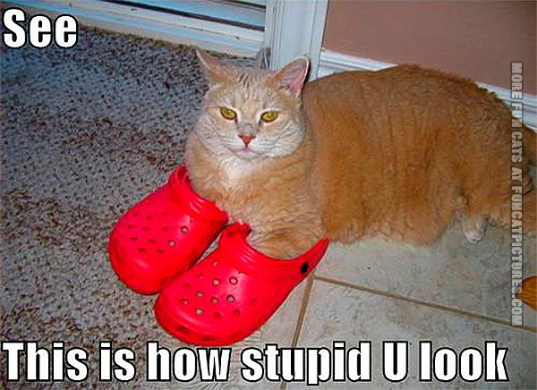 funny-cats-can-in-crocs